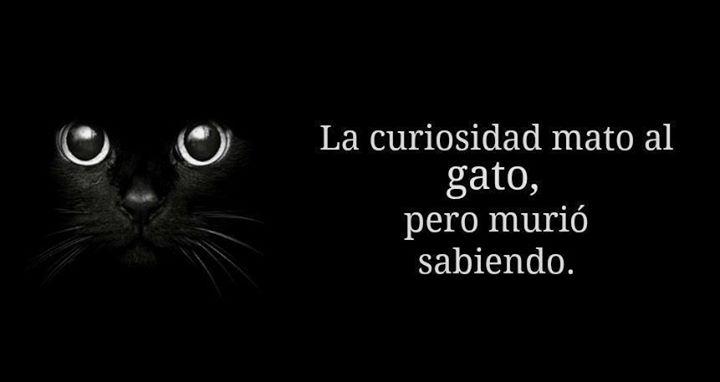 Curiosidad del Gato