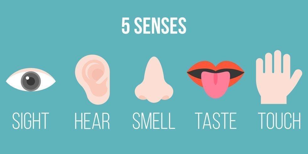 los 5 sentidos humanos